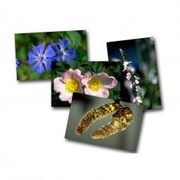 Bachblüten-Karten